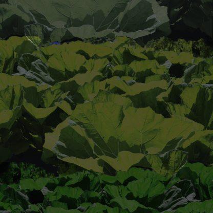 dark leaves print4