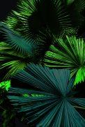 dark leaves print5-2