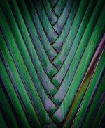 dark leaves print7
