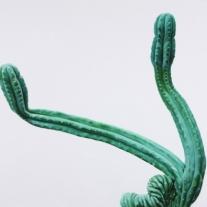 1386_cactus_no.26