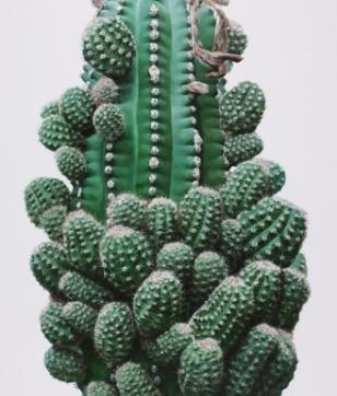 1394_cactus_no.32_